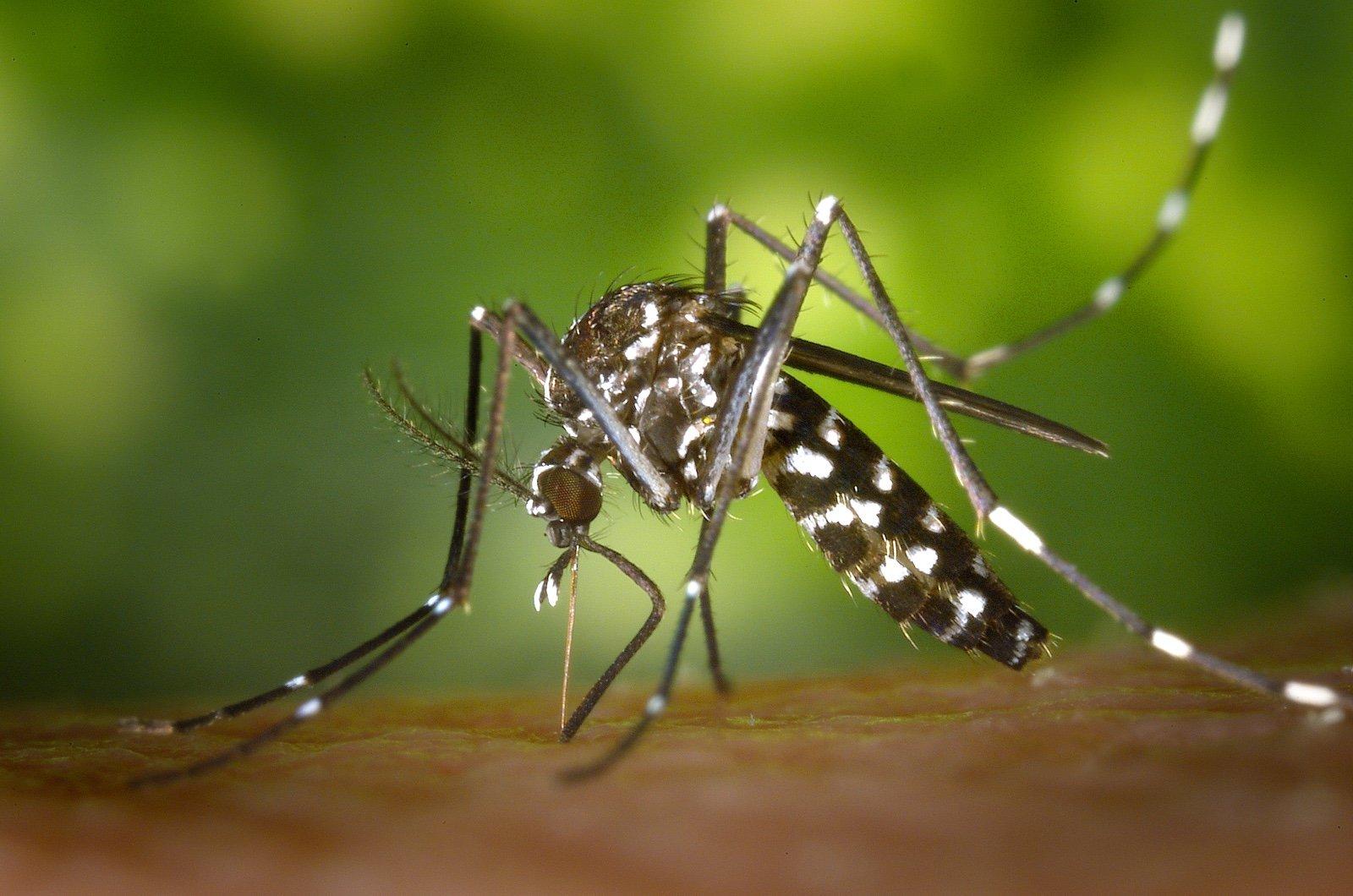 Zika Virus Infection in Pregnant Women